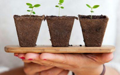 رقابت رشد گیاه